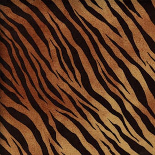 tiger002